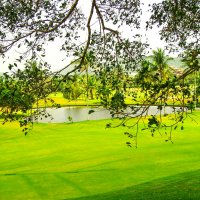 поля для игры в гольф :: Екатерина Самохина