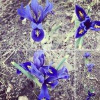 Весна пришла! :: Светлана Ященко
