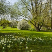 Весна в парке :: Valentina M.