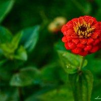 Одинокий цветок. :: Павел