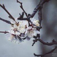 Весна отвоевывает позиции :: Маргарита Б.