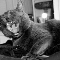 - Меня !!!....  будить  ???!!!.... :: Валерия  Полещикова