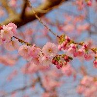 Весна в городе :: Swetlana V