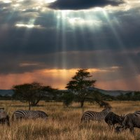 Налетели злые грозовые тучи…саванна...Танзания! :: Александр Вивчарик