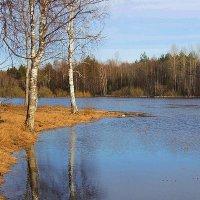 Загляделись  белые березки подружки в воду :: Павлова Татьяна Павлова