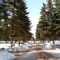 В весеннем парке :: Андрей Заломленков
