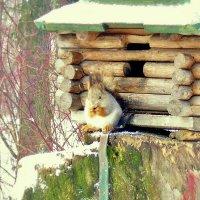 соседи :: Miko Baltiyskiy