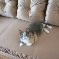 Одыхаем на диване) :: Татьяна