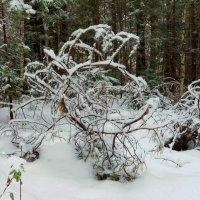 Как закрутило :: Евгения Корнилкова