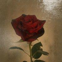 Роза :: Валерия Яскович