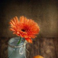 Оранжевое настроение :: Оксана Анисимова