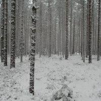 апрель преподносит сюрпризы :: Михаил Жуковский