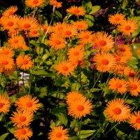 Цветы в саду.. :: Антонина Гугаева