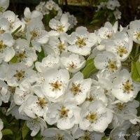 Весна! :: ~ Елена М ~