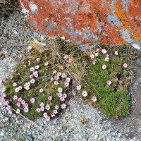 Весна в степи :: Ольга