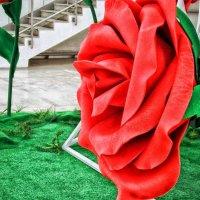 Роза – символ совершенства, мудрости и чистоты. :: Лара ***