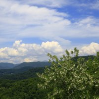 Горы покрылись зеленкой :: valeriy khlopunov