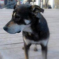 Грустная собака. :: Мила Бовкун