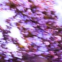 Визуализация ощущения весны! 2 :: Иван Лазаренко