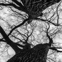 жизнь подобна веткам дерева :: Алексей Горский