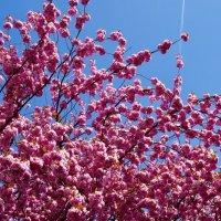 Весны цветение :: Наталья Александрова