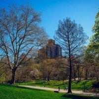 Spring New York :: Андрей Пашко