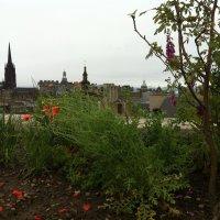 Флора Шотландии на крыше. :: Марина Домосилецкая