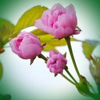Рождение цветка :: Ростислав