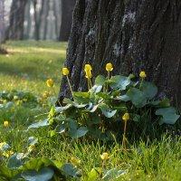 Весна в парке - 3 апреля :: Татьяна Найдёнова