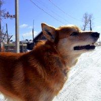 Собакен улыбается) :: Виктория Большагина