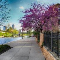 Весна в Индианаполисе :: Яков Геллер