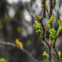 Весна :: Александр Демьянцев