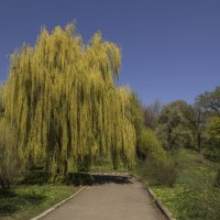 На дорожках ботанического сада. :: Svetlana