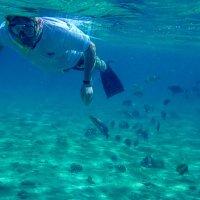 не кормите коралловых рыбок!!! :: Лариса Батурова
