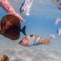 рыбки ручные :: Лариса Батурова