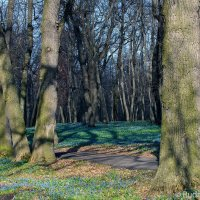 Весенний парк бывшей усадьбы Загряжских-Строгановых. Именно в этом парке были сделаны первые шаги На :: Сергей