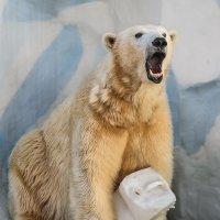 Медведица :: cfysx