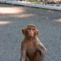 Маленькая обезьянка :: Вера Перекольская