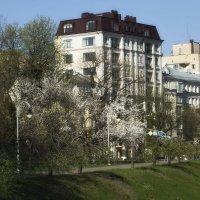 На цветущих улицах. :: Svetlana