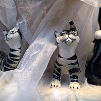 Рижские котики :: Swetlana V