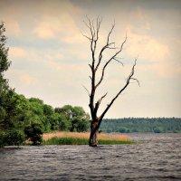 Дерево :: Михаил Цегалко
