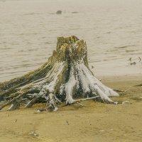 На дне Камского водохранилища. :: petyxov петухов