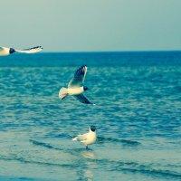 чайки :: Anrijs Slišāns