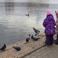 Кормить птиц очень интересно! Попробуйте! :: Андрей Лукьянов