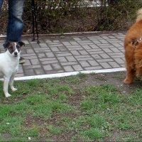 Куба  и Миша - друзья. :: Нина Корешкова