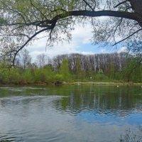 Весна на реке... :: Galina Dzubina