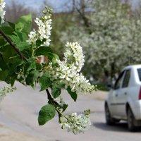 Цветущий апрель :: Татьяна Смоляниченко