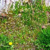 Всего понемножку - и грибы,и цветочки, и одуванчики ..) :: Любовь К.