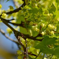 весна :: linnud