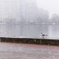 Чайка под снегом :: юрий